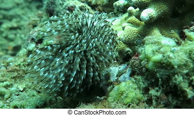 Underwater coral and plants Bali Indonesia