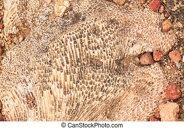 Excavating dinosaur fossils - Paleontological excavation...