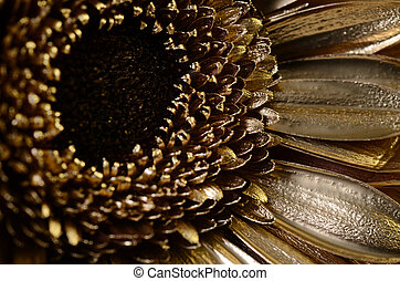Daisy flower covered with golden paint : details