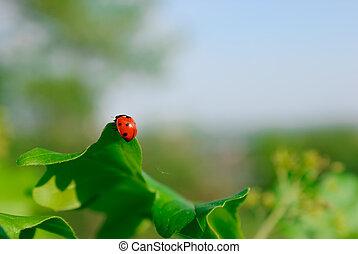 Close-up photo of ladybug on the leaf