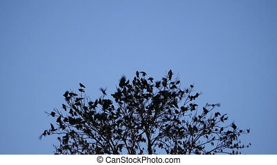 Birds Fly From Tree - Birds flying and tree in foreground at...
