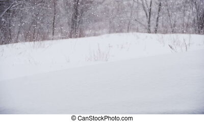 Winter Forest with Snowy Tree. Slow Motion - Winter forest...