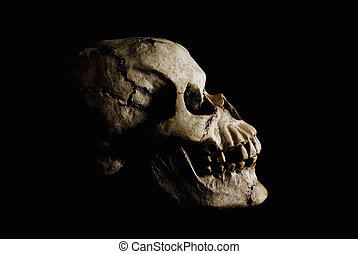 Ancient Human Skull in Shadow - Side view (profile) of...