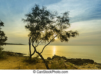 Sunset on the sea. The rocky coast of Mallorca and a pine on the shore