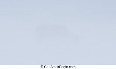 Wild Arctic reindeer in snow blizzard - Svalbard,...