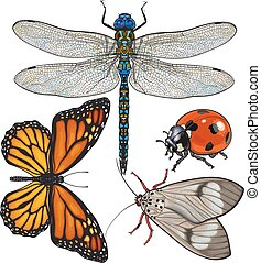 Set of insects like dragonfly, butterfly, ladybird and moth