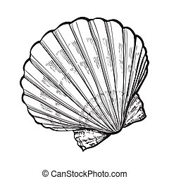 saltwater scallop sea shell, isolated sketch style vector...