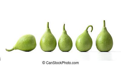 bottle gourd or calabash isolated on white