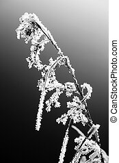 plant in winter - Withered plant in the winter season....