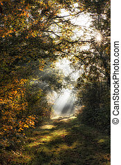 Forest Sunrays - Warm autumn scenery in a forest, with the...