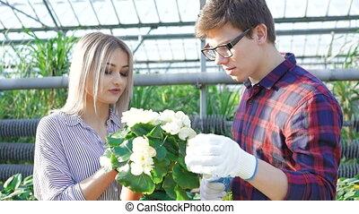 Gardeners checking flowerpots in gardenhouse 4K.