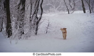 Dog Running Along a Path in the Winter Forest. Slow Motion -...