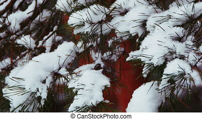 Winter Pine Forest with Snow-Covered Branches Christmas Trees