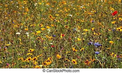 summer meadow - flowers on summer meadow