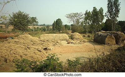 Poor Indian household (farm) 2. Andhra Pradesh, Anantapur -...