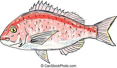 Sea Bream Red Sketch