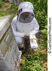 apicultor, abejas, alrededor