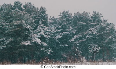 Winter Forest with Snowy Christmas Tree