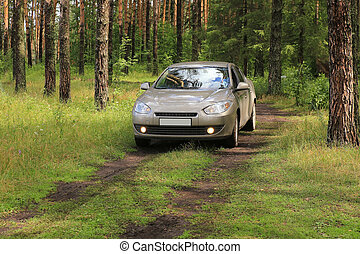 car in wood on glade - car in pine wood on glade in summer