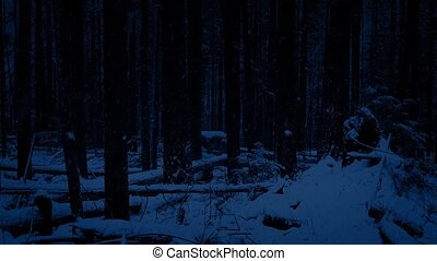 Moving Through Night Forest In Snowfall