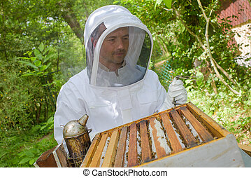 Beekeeper working on open hive