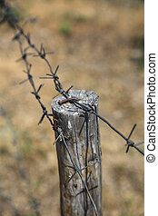 Barbed wire on wooden post
