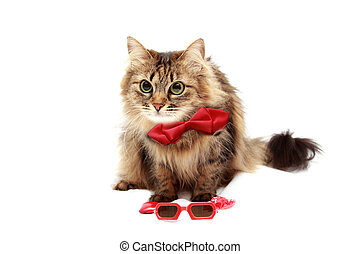 cat with red butterfly tie on a white background with space for writing