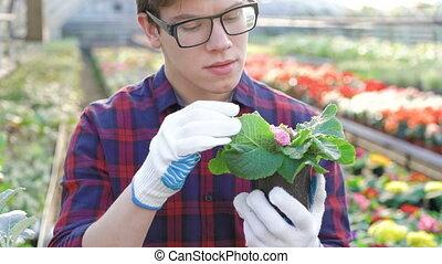 Gardener checking seedling in gardenhouse 4K.