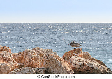 Pelican on a rock in the caribbean. Sea of Curacao as the...