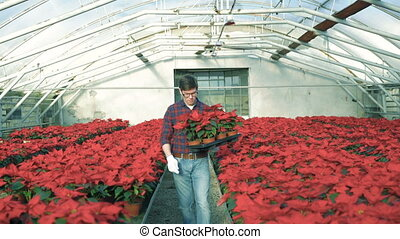 Happy gardener going to camera, holding red flowers and smiling