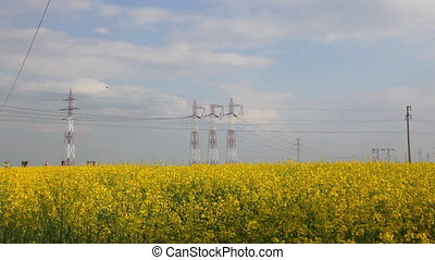 Electricity pillars on yellow flowers field,camera tilt