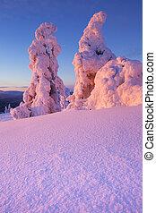 Sunset over frozen trees on a mountain, Levi, Finnish...
