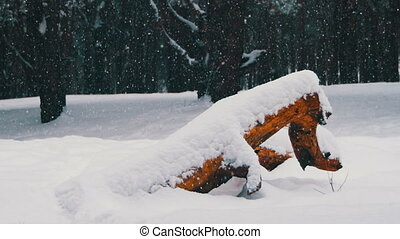 Winter Pine Forest Background with Snow-covered Wood Log -...