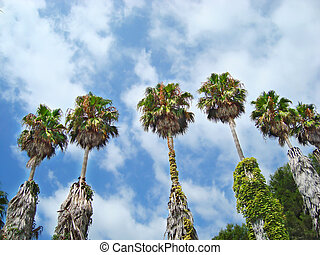 Palm trees against the blue cloudy sky