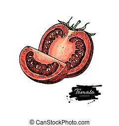 Tomato vector drawing. Isolated tomato and sliced piece....