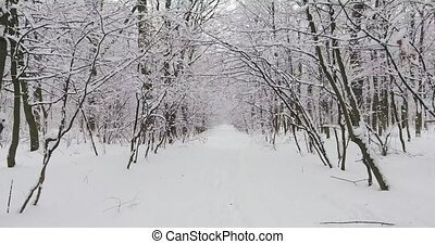 Winter Forest in Snow - Flying drone through the winter...