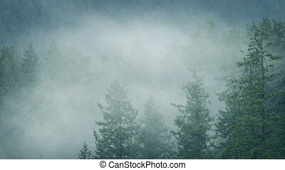 Mist Moving Through Wild Forest In Rainfall - Banks of mist...
