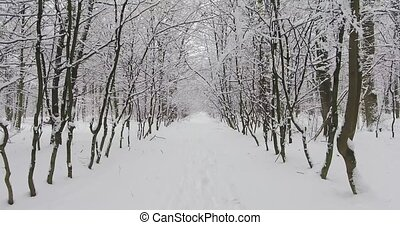 Winter Forest in Snow - Business trip in winter. Christmas...