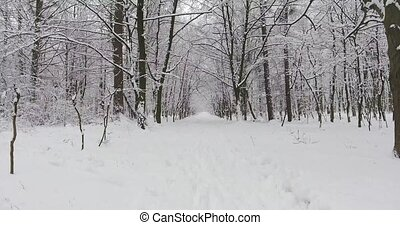 Winter Forest in Snow - Christmas or New Year time. Far from...