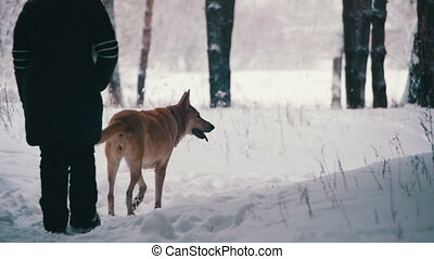 Woman with Dog Walking in the Winter Forest. Slow Motion -...