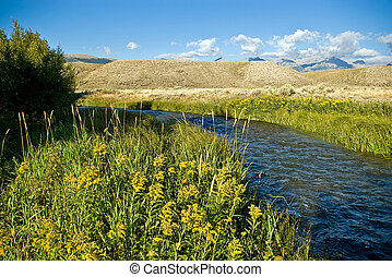 Goldenrod - Late summer flowers along a rural creek.