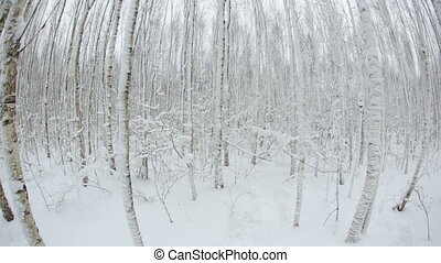 Winter forest with trees in snow. Fish eye lens.