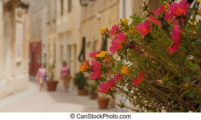 Pink flowers decorate the bright street on a sunny day