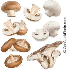 Edible mushrooms. Shiitake, oyster, cremini, white button....