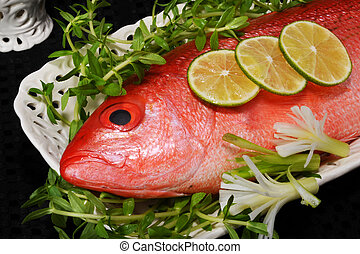 Red Snapper Fish - Closeup of red snapper fish
