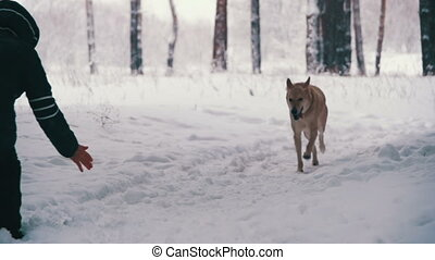 Woman with Dog Walking in the Winter Forest. Slow Motion