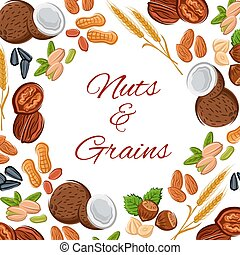 Nuts, grain and seeds vector poster - Nuts and grain of...