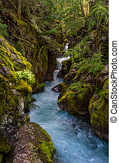 Moss Covers the Rocks of Avalanche Creek in Montana...