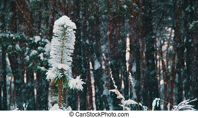 Winter Forest Background - Snowfall in Winter forest with...