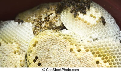 Honey comb with bees. - Honey comb and a bee working. Bees...